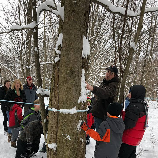 explaining how a tree is tapped