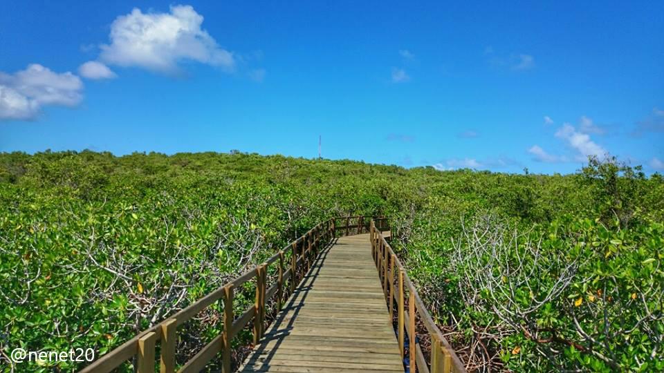 puente ecológico