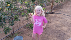 Lovely young lady picking apples!