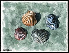 Cindys Sea Shells on Some Slate