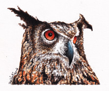 Desdimonda Cucumbersley, European Eagle Owl