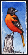 A Lil Baltimore Orioles