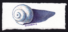 Lil Spiral Shell