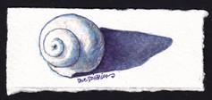 Lil Spiral Shell