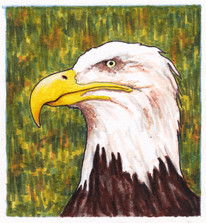 This Eagle Does Not Like You