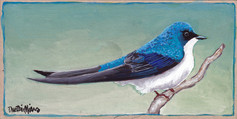 A Tree Swallow