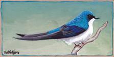 A Tree Swallow