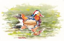 Mandarin Duck Tales