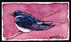 A Lil Barn Swallow