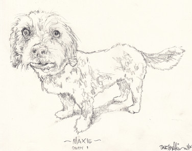 Maxie Study 1