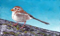 A Cute Lil' Field Sparrow