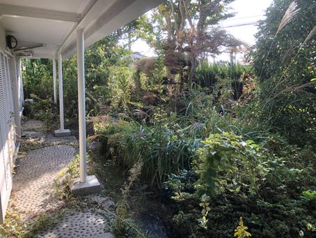 '21.2.25個人邸宅の庭木剪定葉刈りもやっています。
