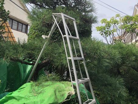 庭木の剪定賜ります!