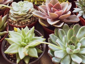 Les meilleures plantes vertes à mettre dans son bureau.