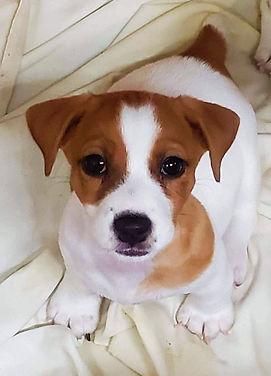 puppy 64.jpg