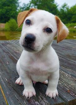 puppy 32.jpg