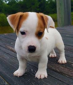 puppy 19.jpg