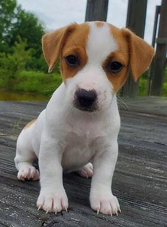 puppy 35.jpg
