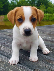 puppy 31.jpg