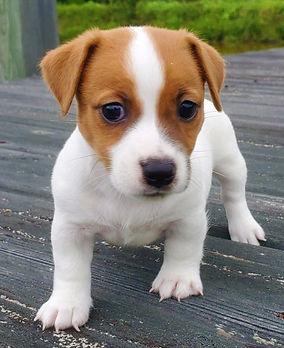 puppy 27.jpg