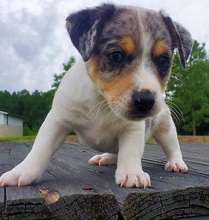 puppy 37.jpg