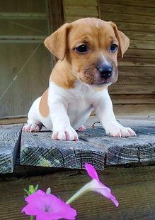 puppy 54.jpg