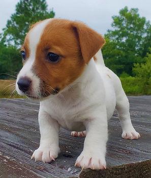 puppy 28.jpg