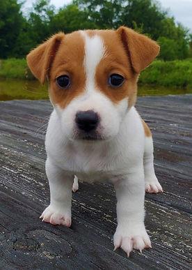 puppy 26.jpg