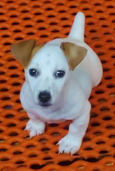 puppy 71.jpg