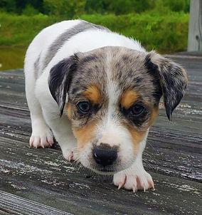 puppy 38.jpg