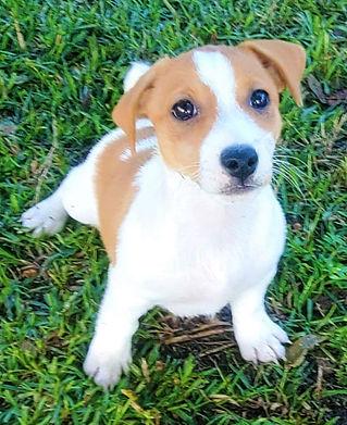 puppy 74.jpg