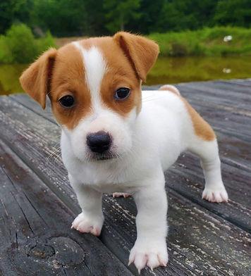 puppy 25.jpg