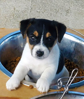 puppy 48.jpg