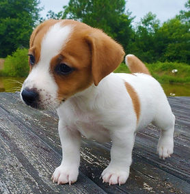 puppy 29.jpg