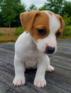 puppy 51.jpg