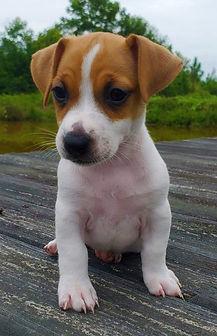 puppy 36.jpg