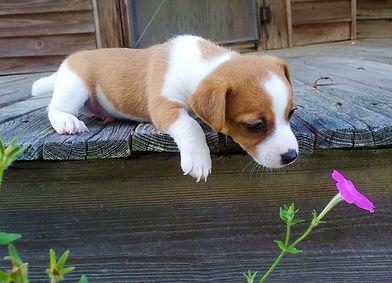puppy 59.jpg