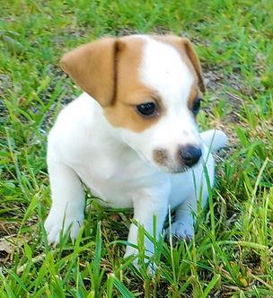 puppy 56.jpg