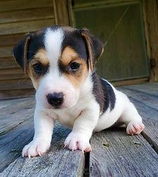 puppy 69.jpg