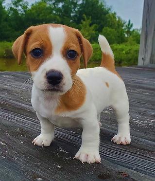 puppy 63.jpg