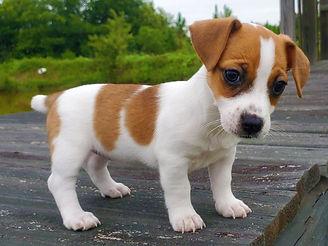 puppy 33.jpg