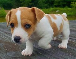 puppy 39.jpg