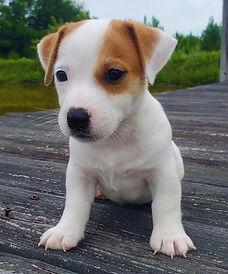 puppy 22.jpg