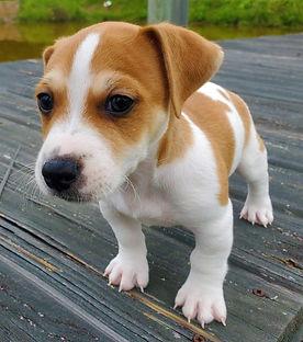 puppy 73.jpg