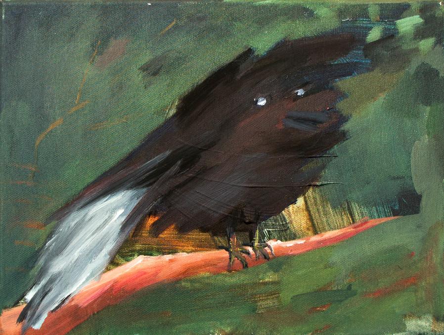 A black bird 24 x 30cm, Acrylic on canvas