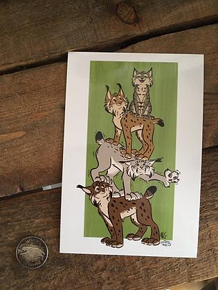 Lynx Stack 4x6 Glossy Print