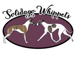 solidago whippets