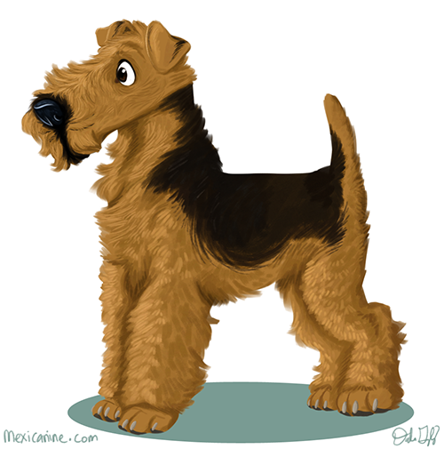 airedale (2)