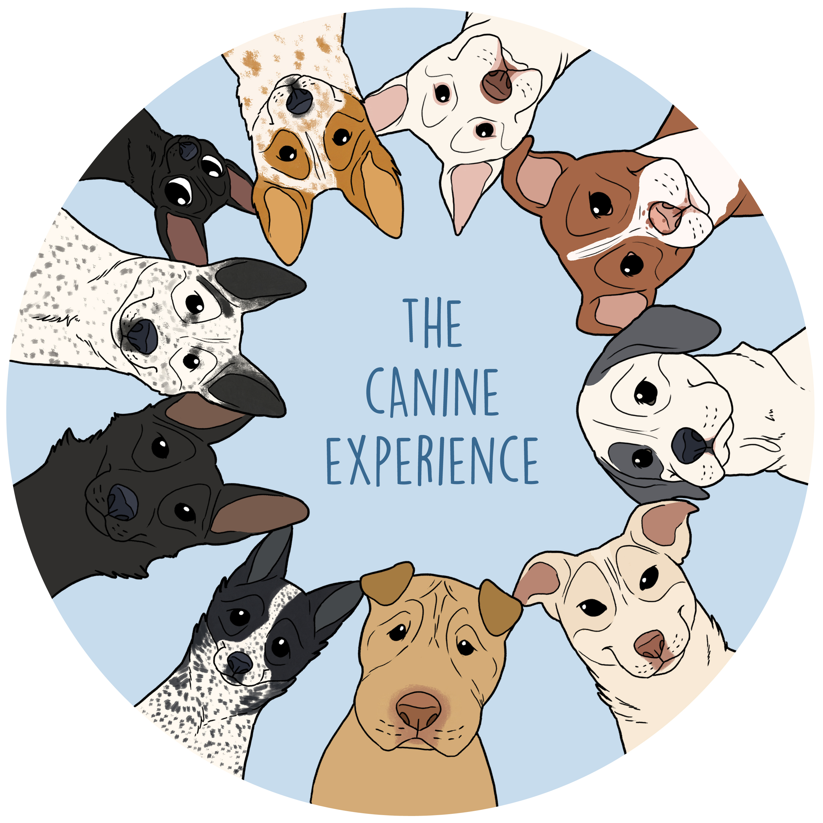 the canine experience
