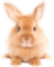 Bunny-PNG-Image.png
